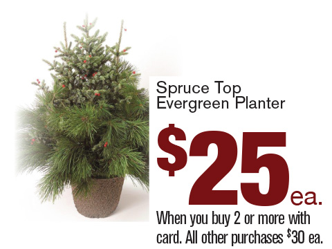 Spruce Top Evergreen Planter $25 each when you buy 2 or more with card All other purchases $30 each